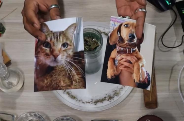 Hechizo-de-protección-para-mascotas
