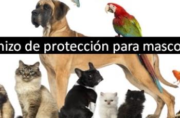 el-Hechizo-de-protección-para-mascotas