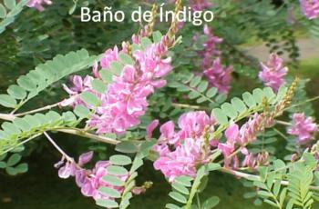 Baño de Índigo