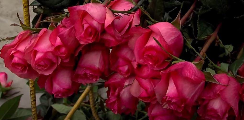 Baño de rosas rojas