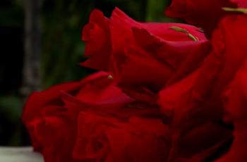 paquete de rosas rojas