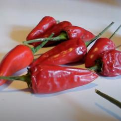 Ritual del chile rojo