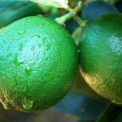 ritual de Limón para separar parejas